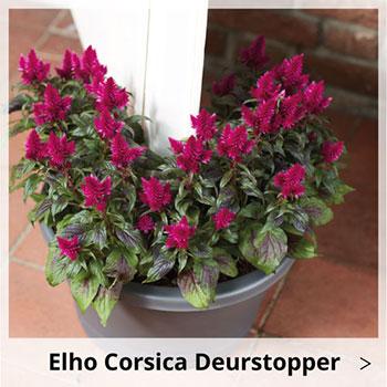Elho Corsica Deurstopper