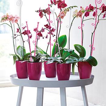 Elho Orchideco
